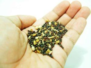Seeds 943865_63059973