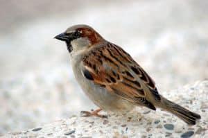 sparrow-lr