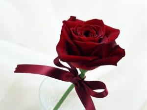 red-rose-lr