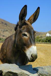 donkey-lr