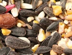 seeds-lr