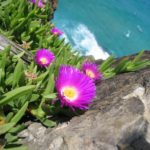 flower-on-cliff